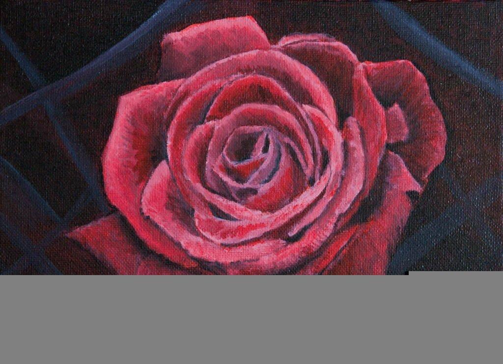 fot. Róża 18x24 -1