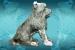 fot.terrier -2