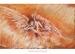 Przebudzenie Anioła-rysunek-pastele-wiśnios-1